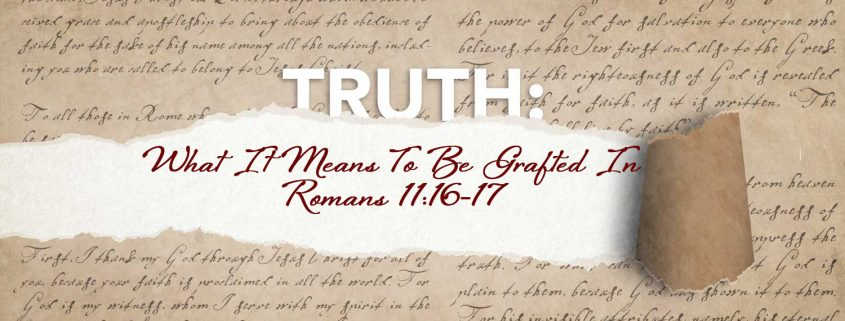 Romans 11:16-17 banner